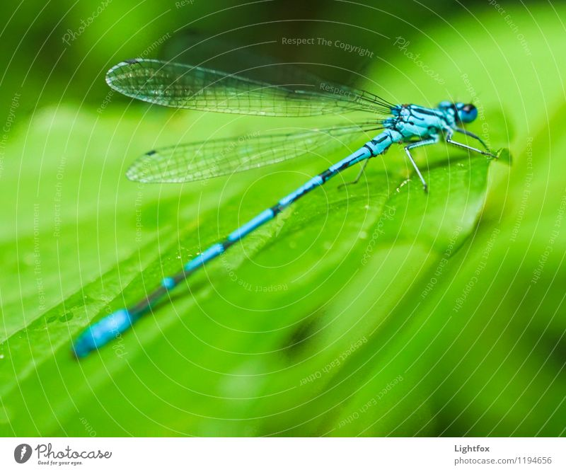 Jet zt Animal Wild animal Dragonfly 1 Happy Willpower Passion Watchfulness Change Starting block (track and field) Airplane takeoff Insect Green Wing Graceful