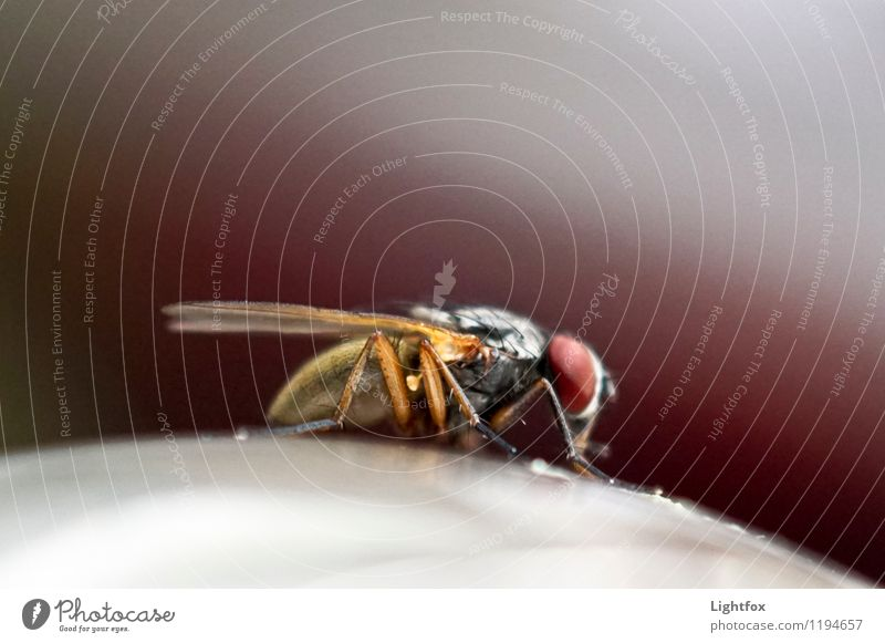 fly robin fly Animal Fly 1 Joy Desire Lust Sex Flying Zoom effect Compound eye To feed Wait Colour photo Interior shot