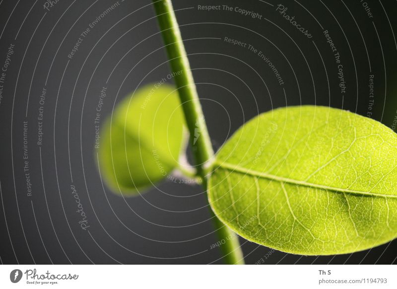 Nature Plant Beautiful Green Summer Leaf Calm Spring Natural Elegant Authentic Esthetic Blossoming Simple Uniqueness Serene