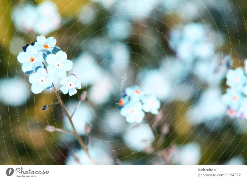 just like heaven... Nature Plant Spring Summer Beautiful weather Flower Grass Leaf Blossom Wild plant Forget-me-not Garden Park Meadow Blossoming Faded Growth