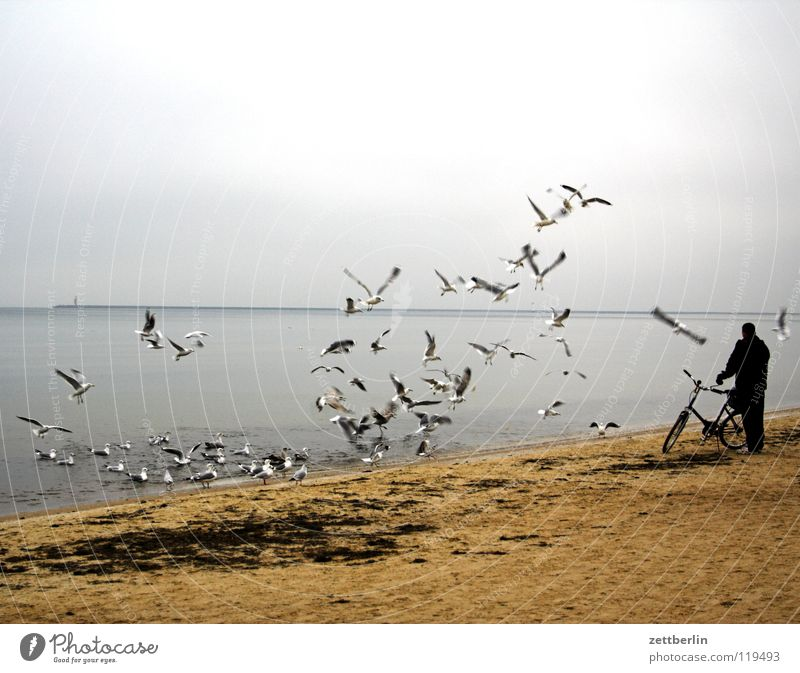 Polish seagulls Seagull Bird Flock of birds Ocean Beach Horizon Lighthouse Usedom Man Bicycle Feeding Stand Cycling tour Walk on the beach Air Off-Season Winter
