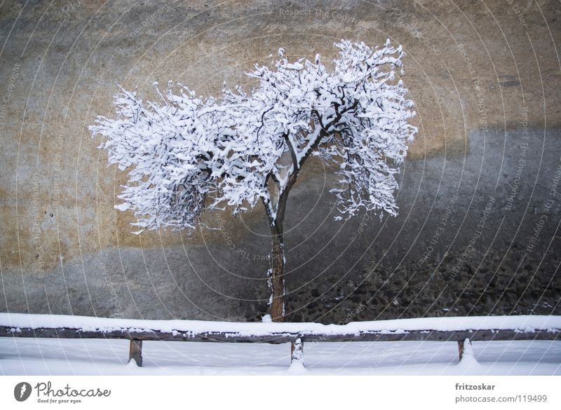 Tree Winter Calm Loneliness Snow Wall (building) Gray Wall (barrier) Italy Historic Fence Old town South Tyrol