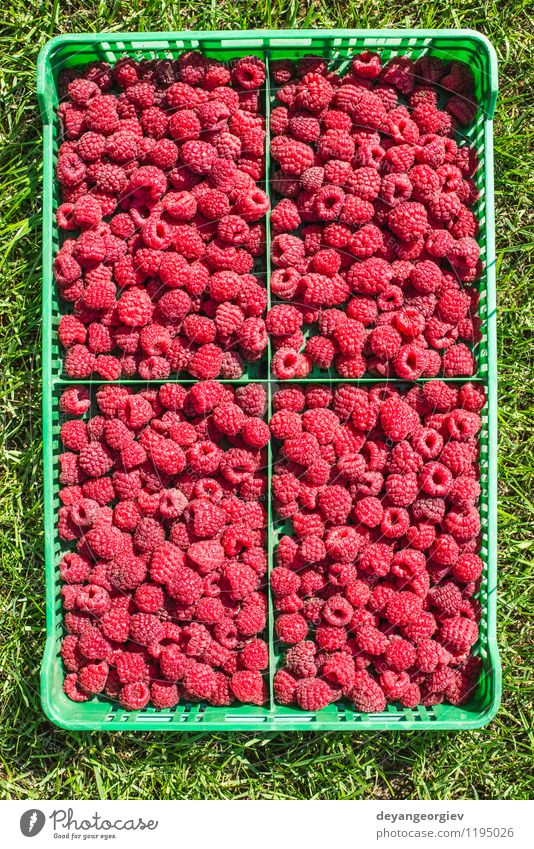 Raspberries in a green crate Summer Red Leaf Black Natural Garden Bright Fruit Fresh Delicious Berries Dessert Diet Vitamin Crate Ingredients