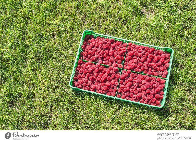 Raspberries in a green crate Summer Red Leaf Black Natural Garden Bright Fruit Fresh Delicious Berries Dessert Diet Vitamin Crate Ingredients