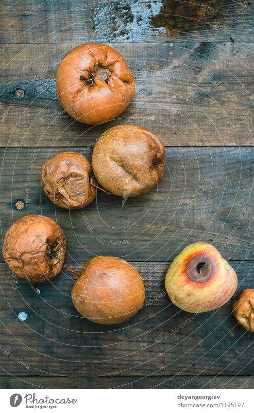 Rotten apples on wood Fruit Apple Garden Autumn Old Good Natural Brown Red White Death rotten food bad Trash Spoiled background Compost ugly agriculture Farm
