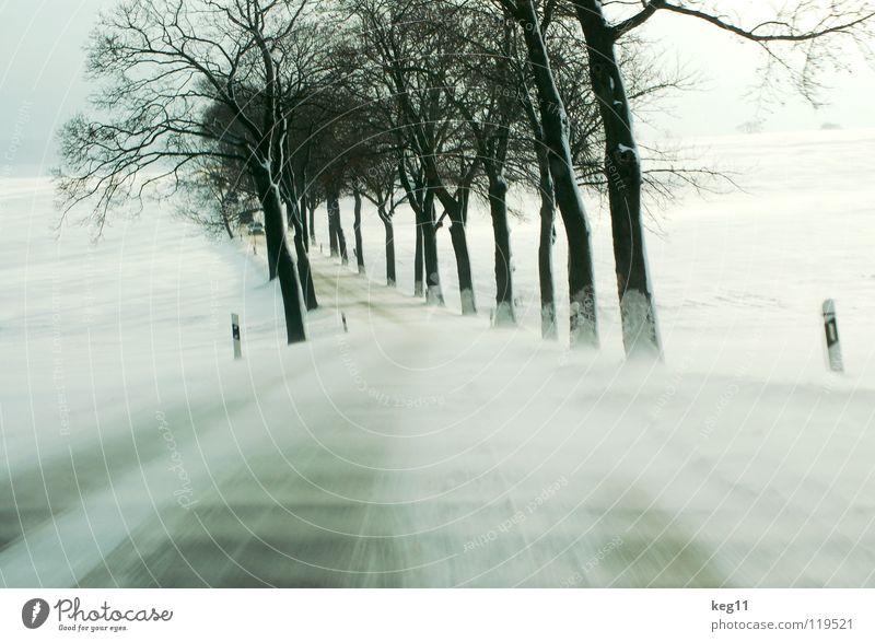 White Beautiful Tree Joy Winter Black Street Cold Graffiti Snow Moody Wind Field Transport Speed Safety