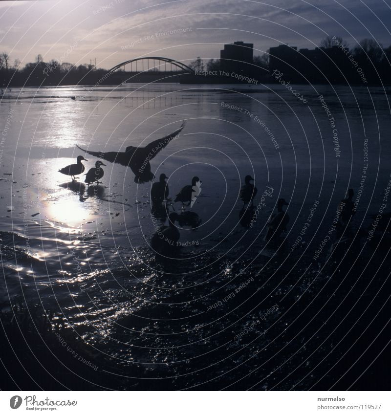 Water Sun Winter Movement Ice Moody Bird Flying High-rise Railroad Sit Bridge River Feather Wing Analog
