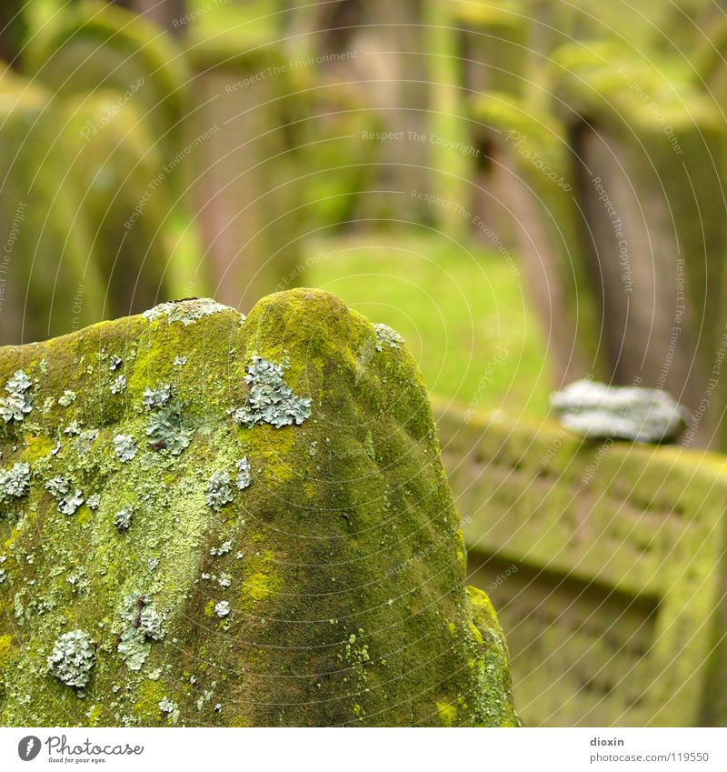 Old Green Sadness Grass Death Religion and faith Stone Corner Transience Sign Grief Derelict Moss Distress Concern God