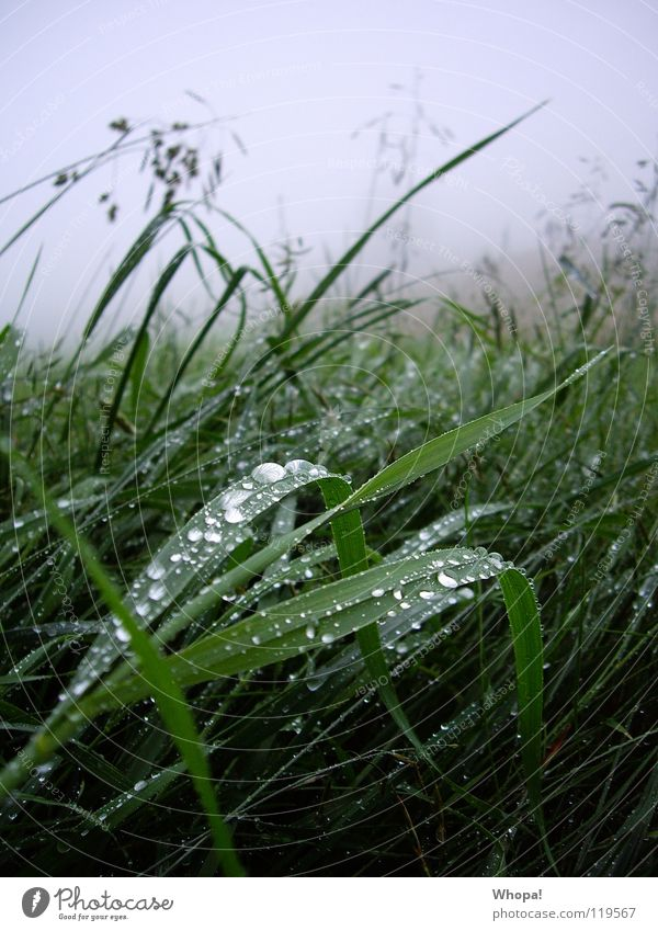 Early morning dew to the mountains Meadow Grass Rain Dew Fog Green Gray Summer