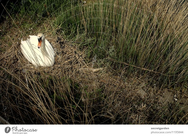 Nature Green Summer White Relaxation Loneliness Calm Animal Spring Grass Coast Happy Together Contentment Wild animal Esthetic