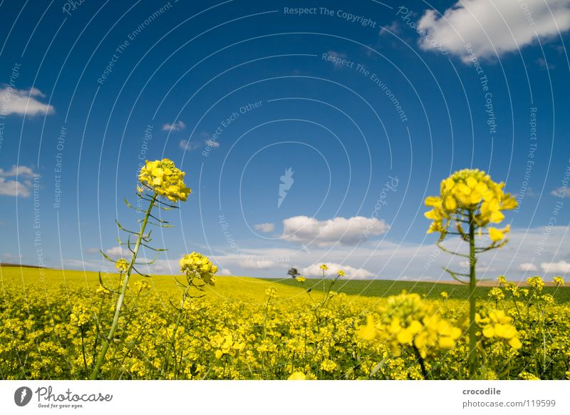 rap # 14 Canola Field Spring Ecological Diesel Carbon dioxide Climate change Yellow Stripe Stalk Oxygen Panorama (View) Clouds Bavaria Rural Leaf green Tree