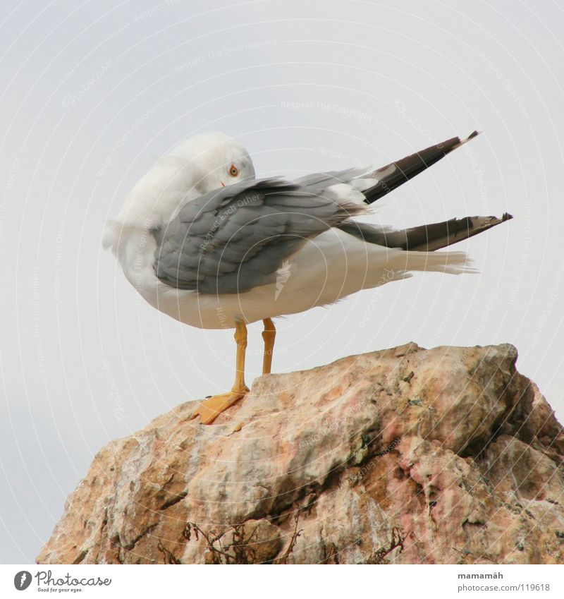 Hide-and-seek Part 1 Seagull Scratch Ocean Lake Feather Bird Wing Stone Feet Mountain Rock