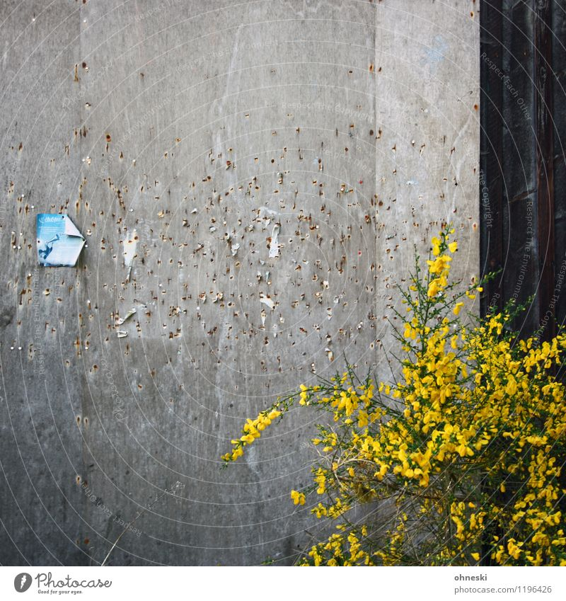 pinboard Plant Wall (barrier) Wall (building) Facade Bulletin board Piece of paper Old Yellow Communicate Colour photo Exterior shot Abstract Pattern