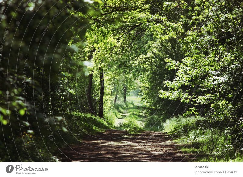 forest path Spring Tree Grass Leaf Foliage plant Forest Lanes & trails Sustainability Natural Green Idyll Environment Environmental protection Target Future