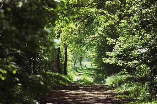 Green Tree Leaf Forest Environment Spring Grass Natural Lanes & trails Idyll Future Footpath Target Environmental protection Sustainability Foliage plant