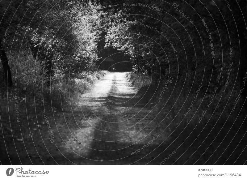 Along the way Landscape Sunlight Tree Forest Lanes & trails Belief Dream Grief Death Longing Hope Optimism Future Black & white photo Exterior shot Deserted