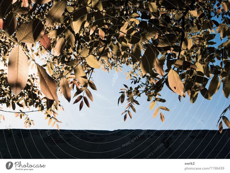 canopy Environment Nature Cloudless sky Climate Weather Beautiful weather Plant Tree Leaf Glittering Illuminate Growth Idyll Closed Deciduous tree Colour photo
