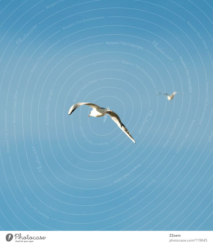 Sky White Blue Animal Bright 2 Bird Flying Feather Wing Rotate Curve Chase Pursuit race