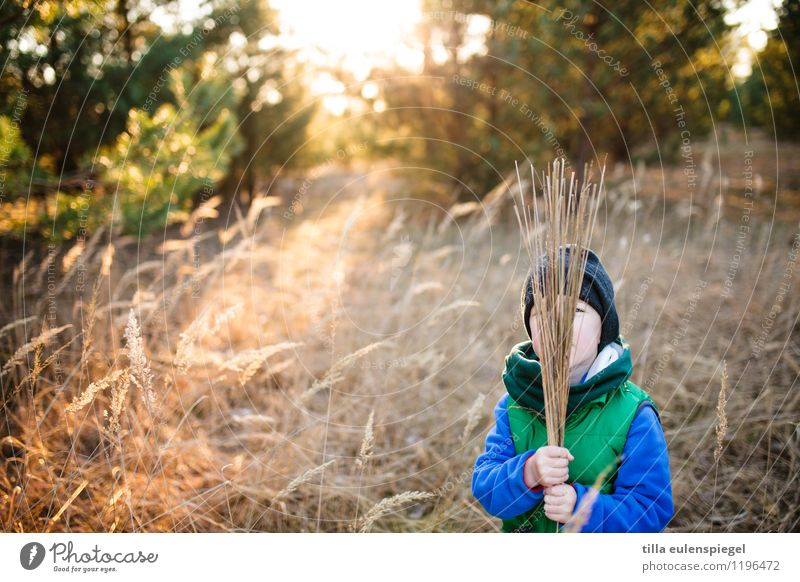 Human being Child Nature Vacation & Travel Plant Sun Tree Relaxation Landscape Environment Life Autumn Grass Boy (child) Happy Masculine