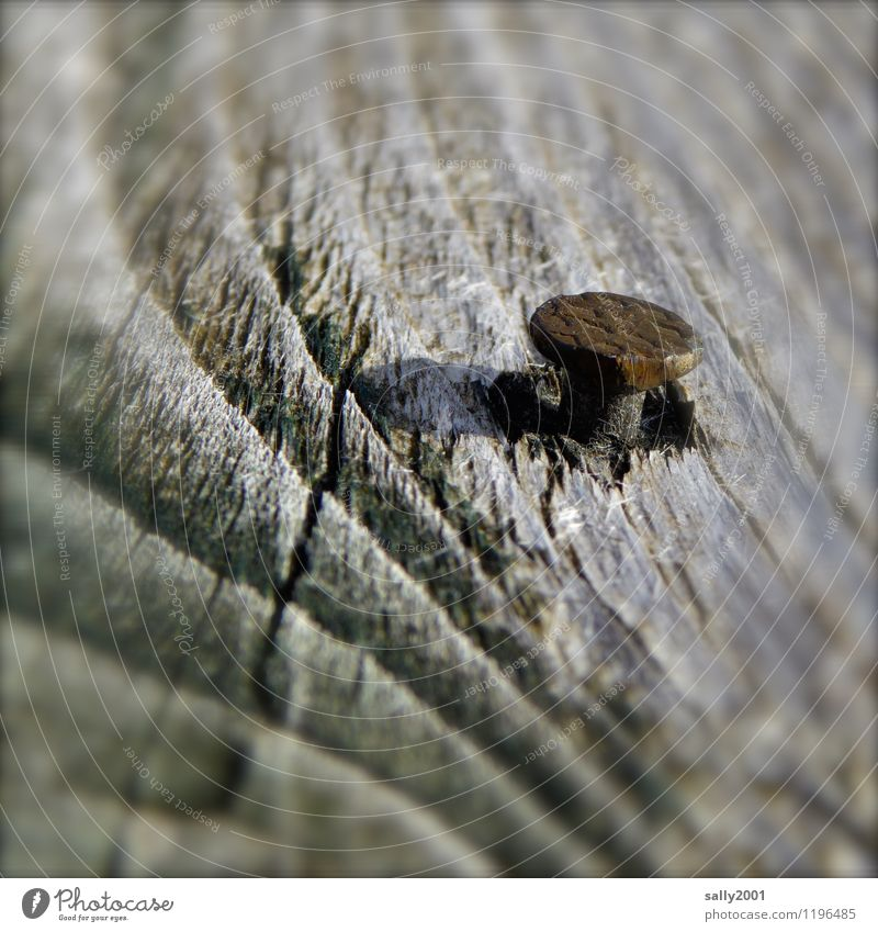 acid test Nail Wood Old Decline Transience Attachment Weathered Rust To hold on Tool Annual ring Colour photo Exterior shot Day Deep depth of field