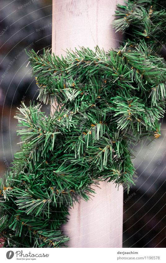 Decorated Joy Harmonious Contentment Feasts & Celebrations Summer Beautiful weather Foliage plant Bavaria Germany Small Town Facade Decoration Fir branch