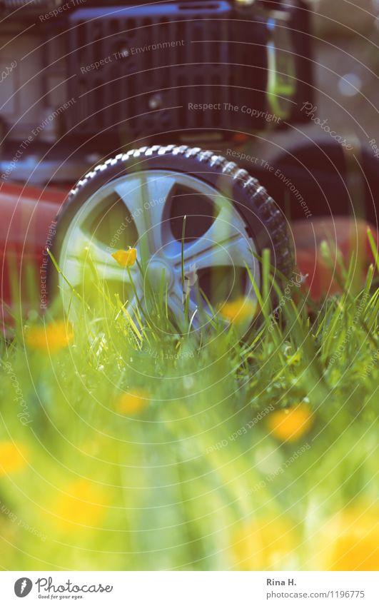 Finally mowing the lawn again Plant Spring Garden Meadow Work and employment Authentic Contentment Joie de vivre (Vitality) Dandelion Lawnmower Colour photo