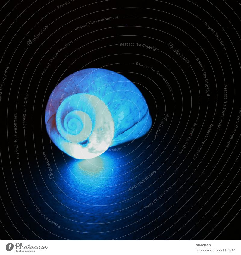 Nature Blue Beautiful Animal Dark Lighting Illuminate Decoration Circle Point Soft Protection Moving (to change residence) Spiral Snail Mussel
