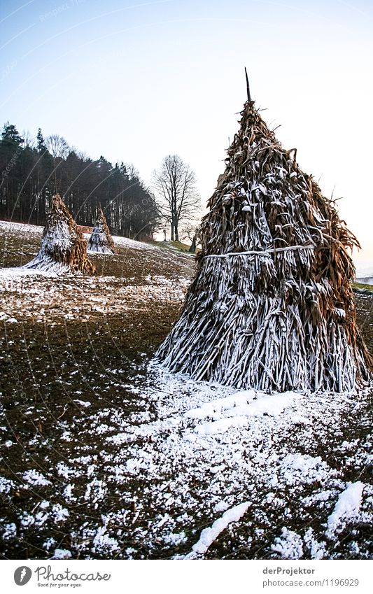 Evening atmosphere on a field in Styria Vacation & Travel Tourism Freedom Winter vacation Hiking Environment Nature Landscape Plant Animal Beautiful weather Ice