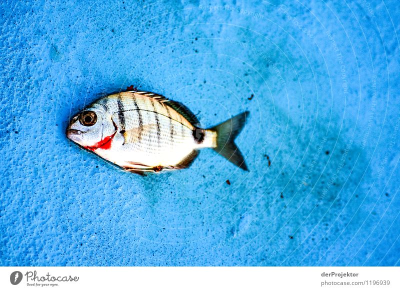 Nature Vacation & Travel Plant Summer Ocean Landscape Animal Environment Emotions Eyes Food photograph Work and employment Leisure and hobbies Fear Tourism