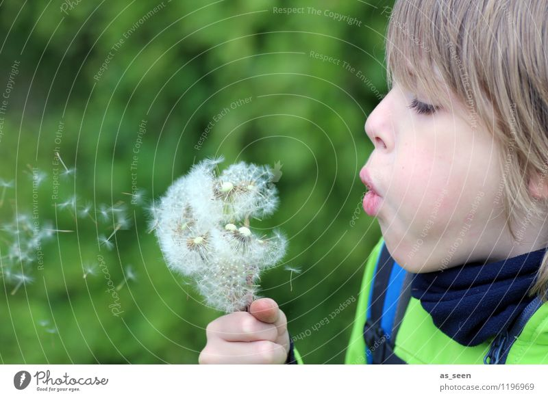 The boy with the dandelion Boy (child) Infancy Life 1 Human being 8 - 13 years Child Environment Nature Plant Spring Summer Flower Blossom Dandelion Meadow