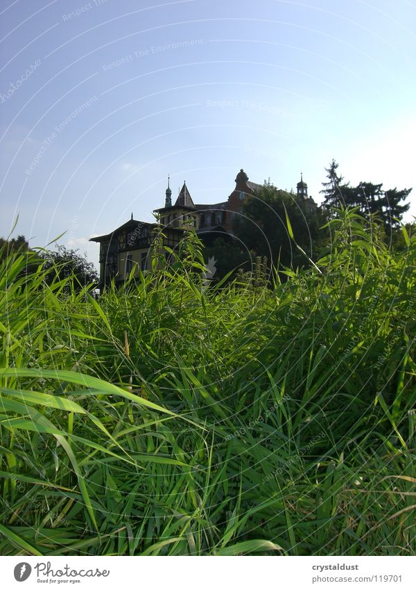 Villa Marie Grass Green Meadow Dresden Summer Freedom Sky Macro (Extreme close-up)