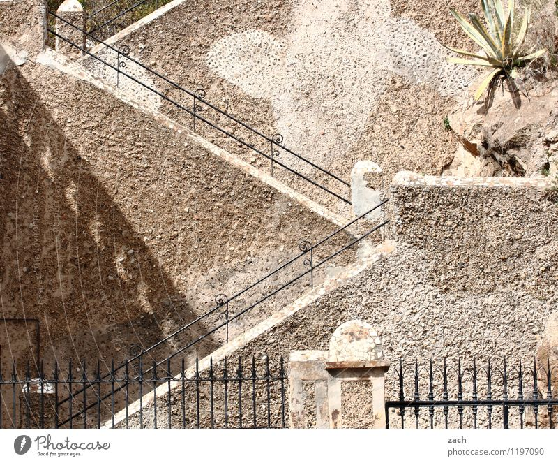 promotion opportunity City trip Plant Foliage plant Palm tree Barcelona Spain Town Old town Castle Ruin Wall (barrier) Wall (building) Stairs Facade