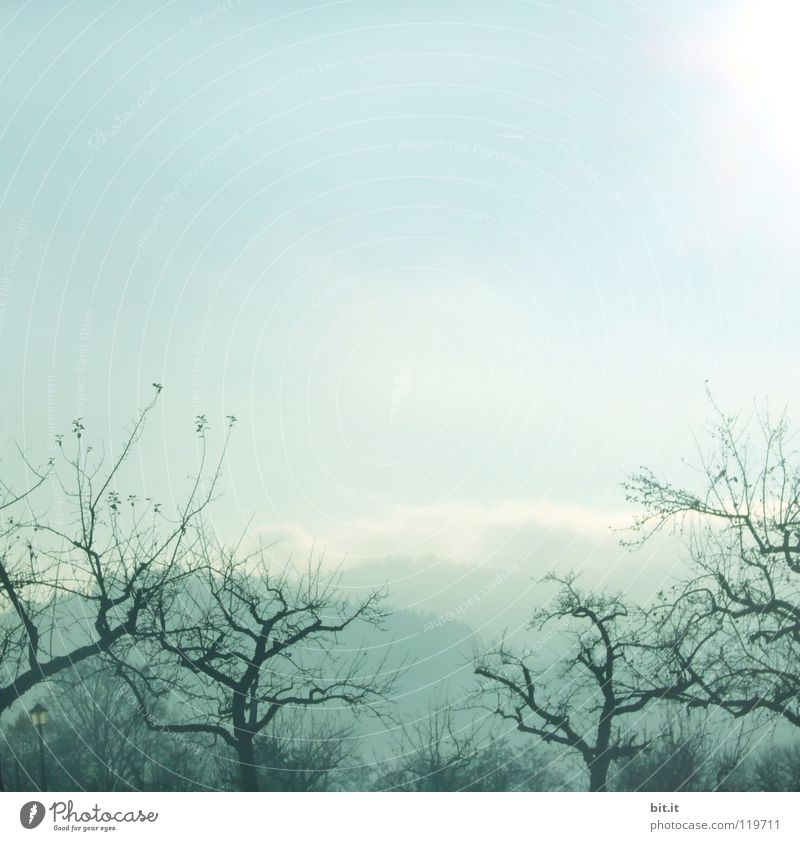 foggy-gnarled-sunny Tree Fog Sky Winter Cold Forest Black Forest Treetop Fir tree Far-off places Slope Steep Alpine White Deep snow Leisure and hobbies
