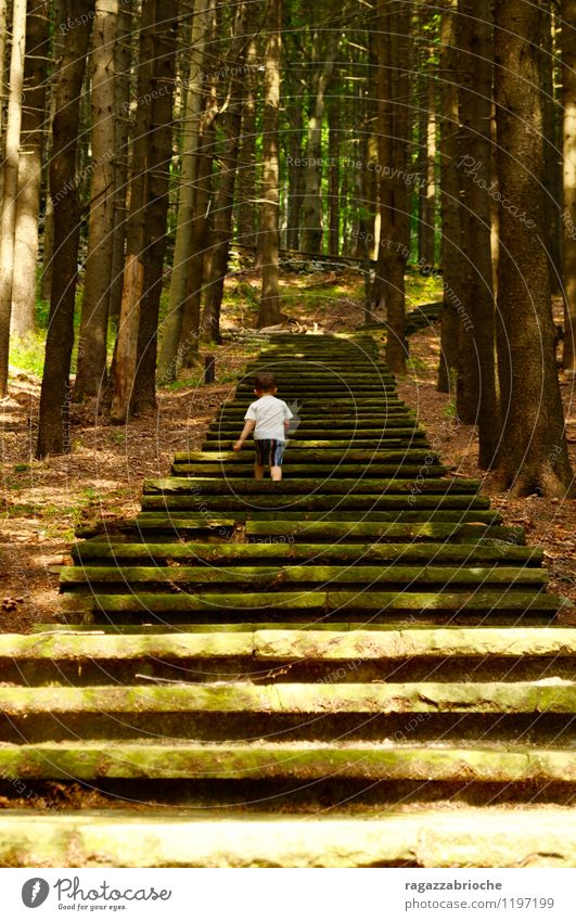 A staircase in the woods Human being Green Tree Forest Mountain Spring Boy (child) Freedom Brown Going Stairs Wild Simple Brave Toddler