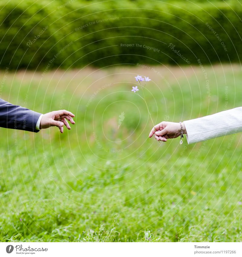 Human being Green Flower Hand Love Meadow Together Friendship Romance Infatuation Sympathy Flirt Agreed