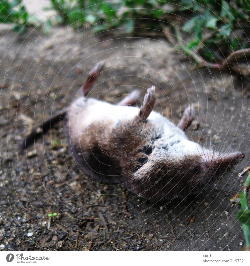 Nature Tree Animal Death Meadow Sand Feet Earth Back Lie Floor covering Bushes Transience Grief Traffic infrastructure Mouse