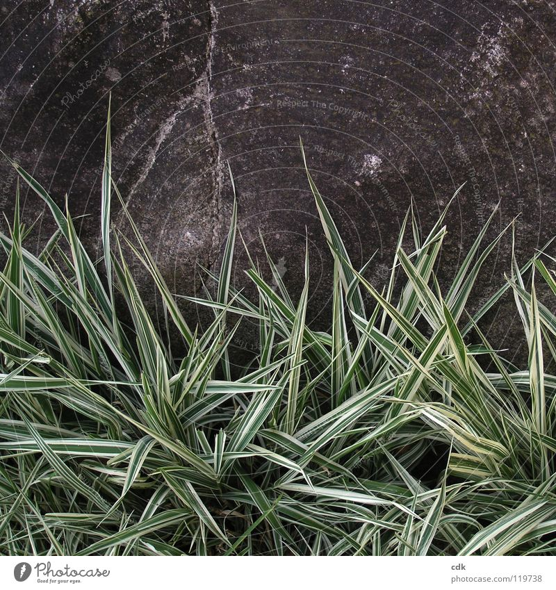 dreariness Grass Ornamental grass Park Green Plant Gray Dark Gloomy Grief Loneliness Past Boredom November Winter Seasons Growth Flourish Garden