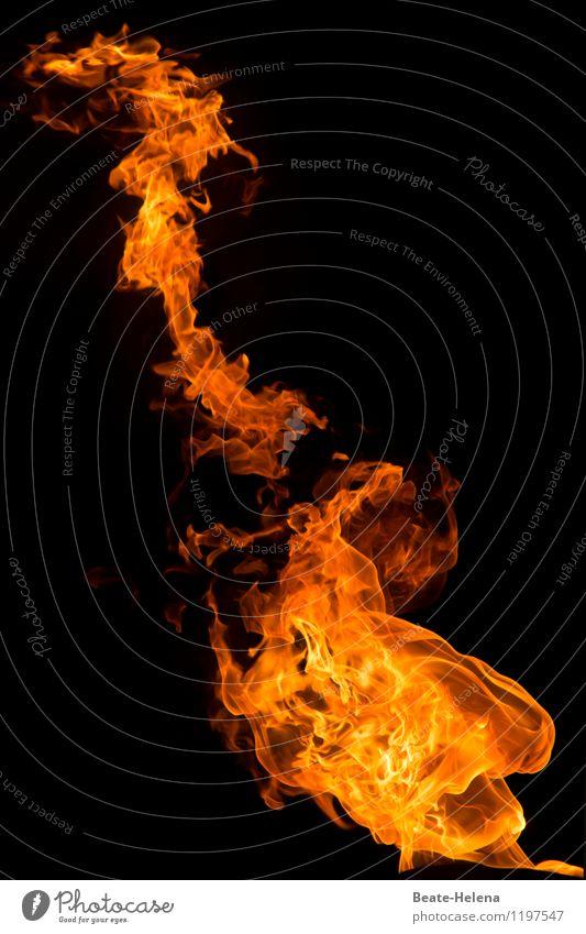 fire dragon Elements Fire Dragon Breathe Observe Movement Glittering Looking Aggression Esthetic Exceptional Threat Dark Fantastic Hot Orange Black Emotions