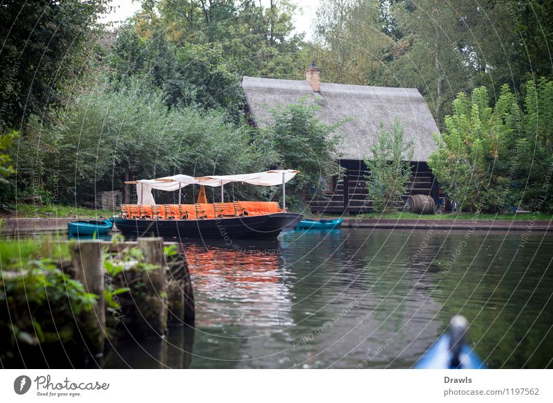 Spreewald barge Environment Nature Landscape Water loam Lubbenau Village Deserted Boating trip Sport boats Rowboat Harbour Driving Sports Hiking Blue Brown