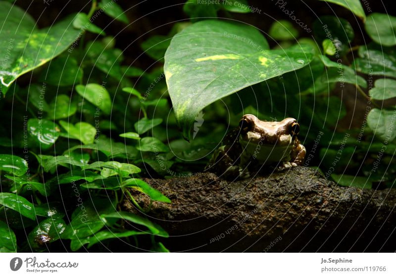 Nature Green Plant Leaf Animal Stone Natural Earth Living thing Zoo Virgin forest Frog Frogs Amphibian Tree frog