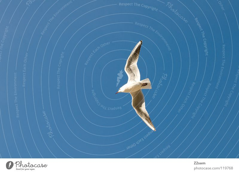 Sky White Blue Animal Bright Bird Flying Feather Peace Wing Rotate Curve Span