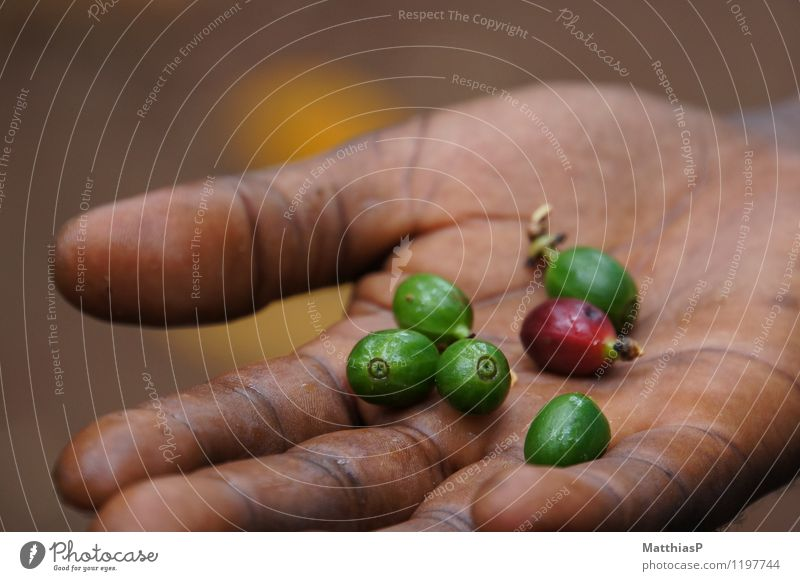 Raw coffee beans in your hand Food Coffee Coffee bean Coffee tree Nutrition Breakfast Lunch To have a coffee Latte macchiato Espresso Lifestyle Exotic Senses
