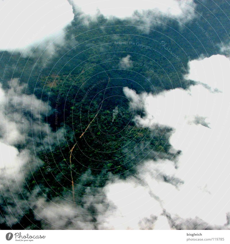 Cameroon from above I Colour photo Aerial photograph Deserted Bird's-eye view Freedom Aviation Landscape Clouds Forest Virgin forest Africa Street Airplane