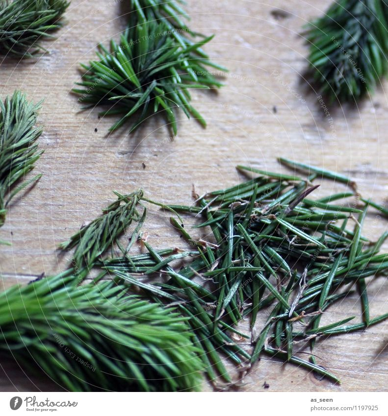 spruce needle scent Beautiful Wellness Harmonious Calm Fragrance Cure Spring Summer Winter Plant Tree Fir needle Spruce Fir tree Fir branch Forest Wood Lie