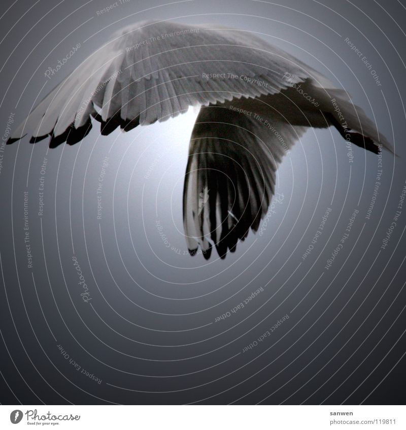 Sky White Sun Black Clouds Loneliness Animal Gray Legs Bird Flying Aviation Feather Wing Stomach Hide