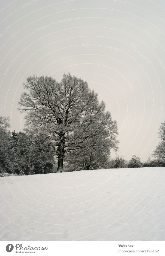 winter Environment Nature Landscape Sky Winter Climate Beautiful weather Ice Frost Snow Tree Meadow Field Forest Cold White Peaceful Attentive Calm Idyll