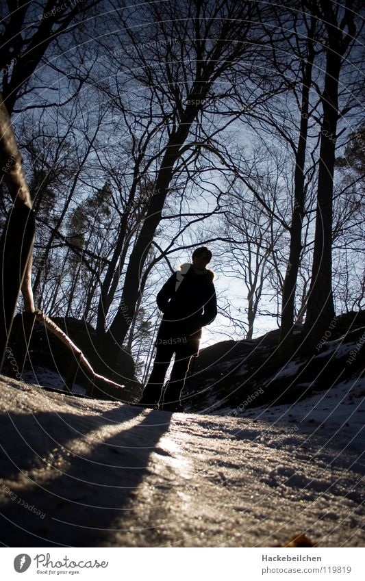 Human being Tree Sun Winter Forest Dark Snow Ice Glittering Handrail Smoothness Dazzle Saxon Switzerland