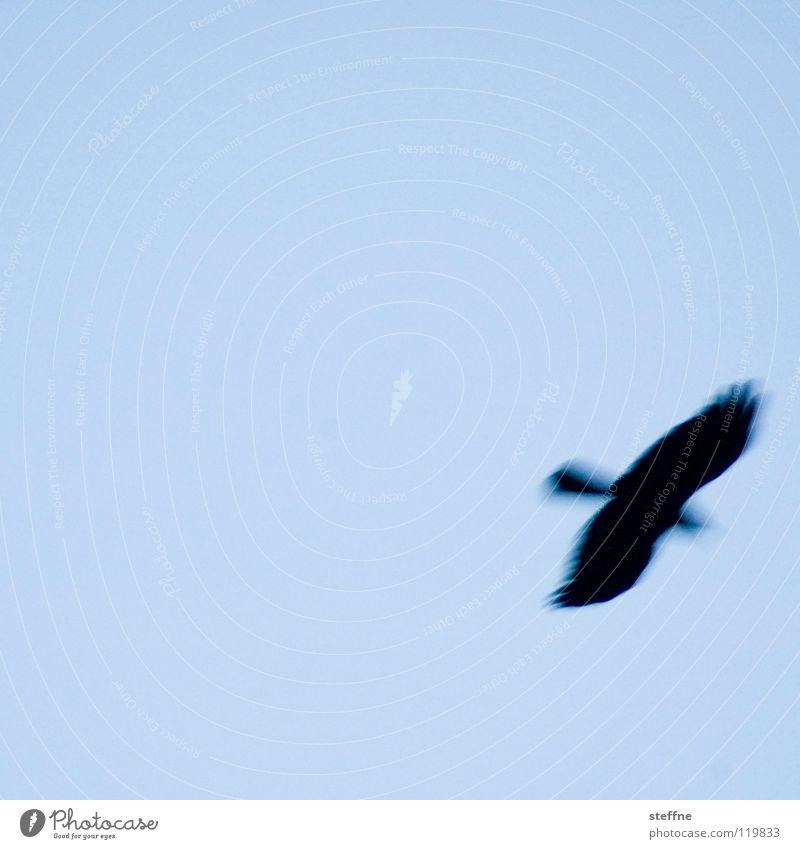 Air Bird Flying Hover Blue sky Floating Sky blue Light blue Cloudless sky Bird of prey Flight of the birds Clear sky Bright background