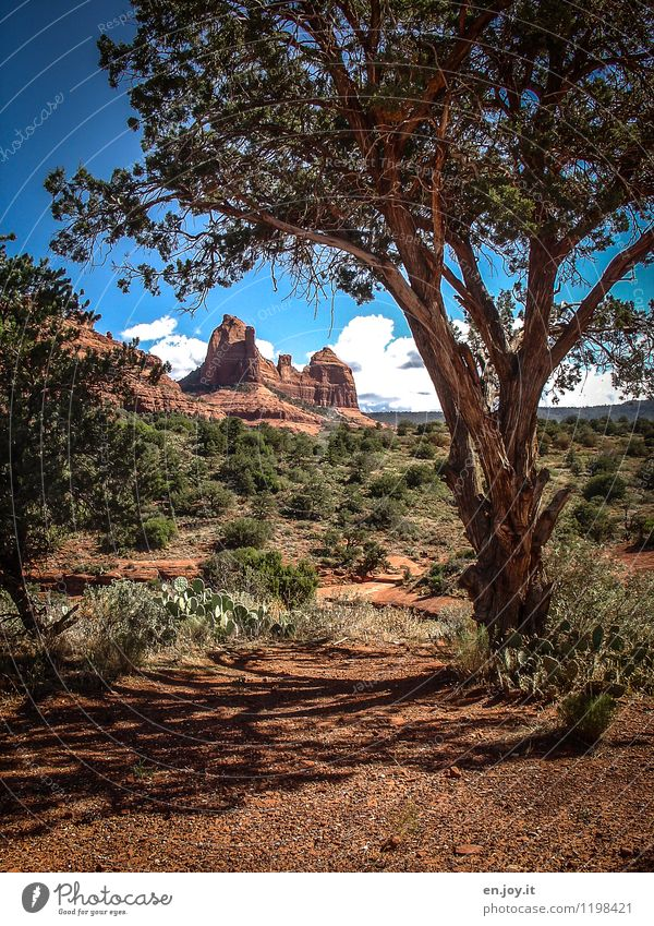 Sky Nature Vacation & Travel Plant Summer Tree Landscape Clouds Environment Lanes & trails Freedom Brown Sand Rock Tourism Bushes