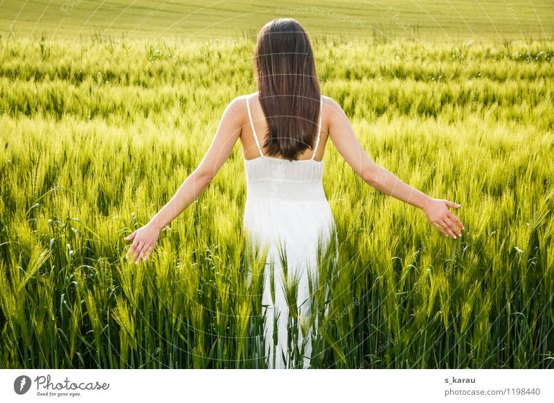 evening sun Grain Allergy Summer Feminine Woman Adults Body Hair and hairstyles 1 Human being 18 - 30 years Youth (Young adults) Nature Spring Agricultural crop